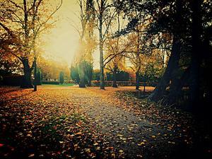 Stadsparken och hösten. Foto: Johan Pettersson