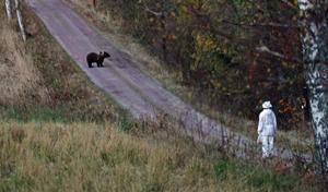 Hösten 2012 möter Teresa Janus en björn när hon är ute och går på en skogsväg.  Bild: Kyösti Ylinen