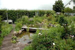 damm. Dammen som delar av trädgården grävdes förra året.