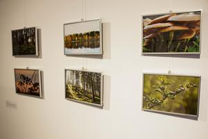 Moa Almerborn står för fotokonsten på utställningen.