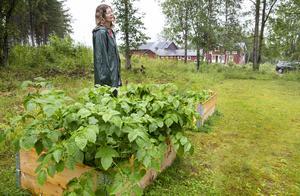 Ute på gården har Helena och Per-Olov planterat odlingar så som potatis och morötter, men även några kryddväxter.