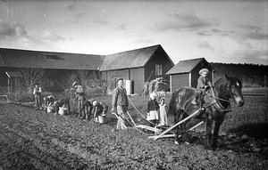 Potatissättning på åkern intill den gård som kom att rivas för att lämna plats för kommunhuset i Djurås. Fotot finns i Lissdanielsgården.
