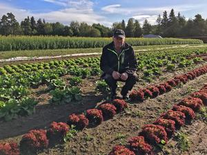 Den här säsongen har Anders och hustrun Ann odlat åtta olika salladssorter.