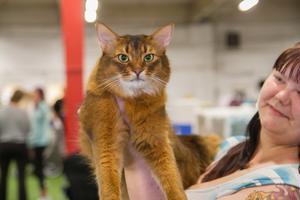 Erina Flinkman håller upp katten Chaths.