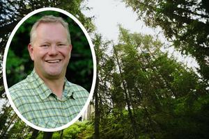Enligt Skogssällskapet finns det i Dalarna 290 miljoner ton koldioxid lagrad i den växande skogen.