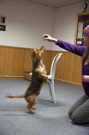 Även hundar kan göra upphopp! Hunden Sheldon med matte Jenny Nilsson.