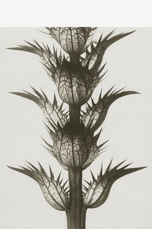10. Botanisk poster