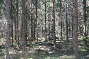Intresset för att skydda hotade arter i skogen finns hos många skogsägare. När rädslan för att få inskränkningar i äganderätten ökar, leder det förstås till att skogsägarna gör det de kan för att inte gynna en skog som de tror kan bli nyckelbiotopsklassad, skriver Amalia Mattsson.