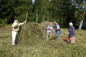 Gammalt jordbruk. En hässja på gång. Från vänster: Alf Rune, Lillemor Karlsson, Rolf Renholdsson och Ingevi Fall.BILD: ANDERS ERKMAN