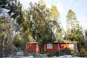 Från förrådsbyggnadens tak har Jan-Erik och Lena lyckats få bort en del av nedfallna stammarna.