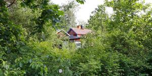 Det är en frodig växtlighet på Berit Wallenborgs tomt.
