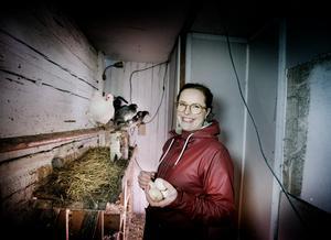 – Jag kan inte vara utan naturen och odlingar, säger Nina. I en av ladugårdarna kuttrar de nio hönsen, här kan familjen plocka ägg ur redena varje morgon. Och trots snön syns många spår efter sommarens odlingar.