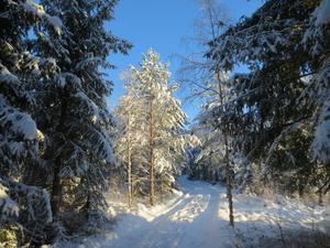 Idyllisk vinterlandskap på Ren