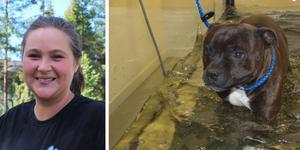 Hundtränaren Camilla Grunditz har skaffat Norrtäljes första vattenlöpband för hundar - en vattentrask. Staffen Tarzan mår bra av vattenträningen.