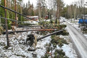 Nedrivna elledningar i Gräddö efter stormen Alfrida. Henrik Ismarker/Spillersboda flygfoto