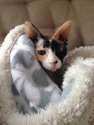 Doris, en frusen katt men som ändå värmer sin matte. Bild: Helena Wirdby