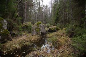 Så här liten är den åfåra i Sörsundet som ska bli ny huvudfåra för det södra utloppet från Hamrångefjärden. Foto: Micael Söderman