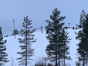 Vargen var cirka 150 meter från skidåkarna. Foto: Privat