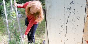 Christina Schyberg, ekolog på Köpings kommun rätar upp ett ungt äppelträd som vandaler tippat omkull.
