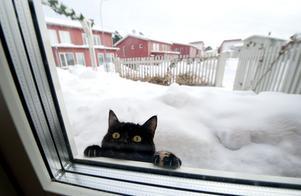 Insändarskribenten vill uppmärksamma alla om de hemlösa katternas situation. Foto: TT