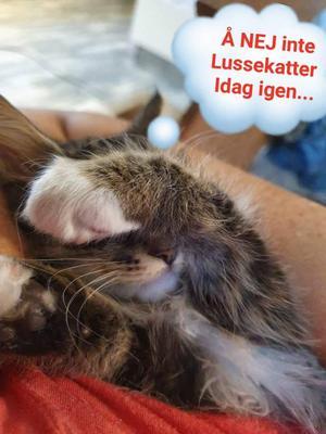 158) Våran lilla Lussekatt... Foto: VIKTORIA SUNDIN