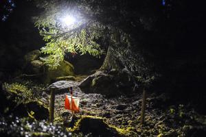 Den första skogstafetten sedan 2019 avgjordes i Hälleforsnäs.
