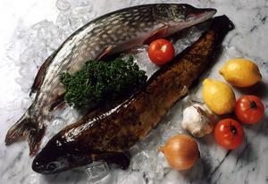 Hur läcker är en gädda från Vättern egentligen? EU:s livsmedelsmyndighet anser att den innehåller så mycket kemikalier att vi bara ska äta fisk från Vättern en gång per månad.