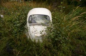 Skribenten klagar på att det står många skrotbilar i framför allt Hermanboda i Ånge kommun.