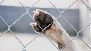 Vissa djurägare kan få ett föreläggande vid en första kontroll om bristerna är allvarliga. Är bristerna inte lika allvarliga kan djurägarna få tid på sig att rätta till problemen.