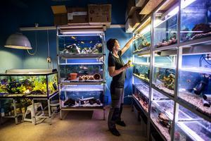 I 14 år har Lotta Haglund drivit Zoobutiken i Ö-vik. Beslutet att köpa butiken är något hon inte ångrar.