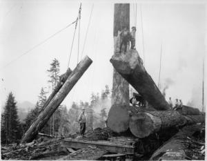 Stålvajrar användes för att hantera de stora träden och stockarna.