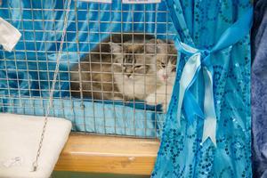 De flesta katter vilade i sina burar.