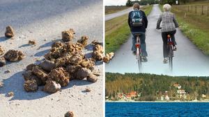 Det är för mycket hästskit på vägarna på Alnö, menar skribenten. Bilder: TT / Håkan Humla