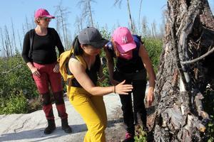 Deltagarna i skogskursen fick en förmiddag vid Hälleskogsbrännan för att se hur naturen repar sig efter skogsbranden för fem år sedan.