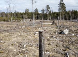"""""""Genom att förbjuda kalhyggen och införa ett hållbart skogsbruk kan Örebro län bli en föregångare i skogsbruket."""