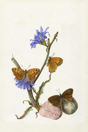Frontespisen från Fjärilar.