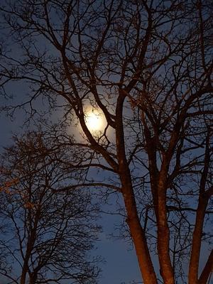 Den här bilden tog jag på väg hem från mitt jobb i Skinnskatteberg i början av februari, skriver Anna-Lena Karlsson.