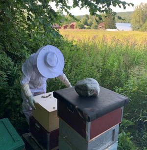 Egenproducerad honung kommer Elvåsa gård också att sälja – i små mängder.