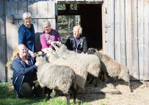Sofia Sjöström, Sundsvalls museum, Marianne Hellström och Lena Byström från Medelpads Hemslöjdsförening samt djurskötaren Börje Englund kelar med Norra bergets får - några av många producenter av ett fantastiskt textilmaterial.
