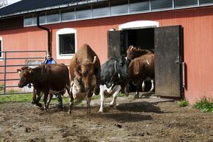 Djurhållningen ger möjligheter till att använda naturgödsel och minska behovet av konstgödning.