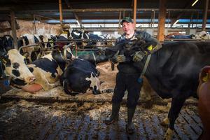 De hemlösa korna har funnit sig väl tillrätta i Kjell Jonssons besättning i Nedansjö. De både mjölkar och mår bra