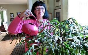Karin Berggren Råland har en gammal novemberkaktus som hennes mormor haft. Foto:
