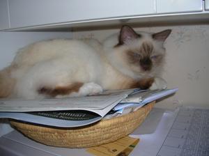 Min kära katt Amadeus har hittat sin älsklingsplats. Korgen ovanpå micron. Där kan han ligga en hel natt.
