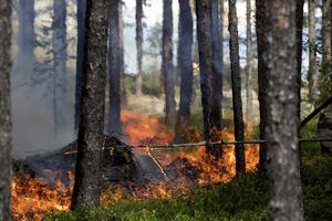 Hettan var påtaglig när eldens framfart långsamt svedde marken och träden.