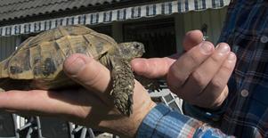 Sköldpaddan Gunnar, Daniel Svenssons livskamrat sedan 20 år tillbaka.