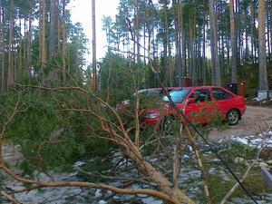 Med minsta möjliga marginal klarade sig bilarna från det fallande trädet.