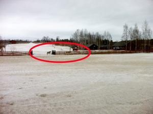 Thony Skogsberg, teknikchef på Kungsbergets skidanläggning fångade tre vargar på bild i skidbacken på fredagsmorgonen.