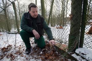 Djurförmannen Johan Lindström visar ett av hålen i varghägnet som djuren rymde genom.