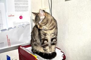 Vet sin plats. I maj var det nära att Spinnhusets katter åkte ut på gatan men nu kan Rut andas ut i inkorgen. BILD: Leonel Marjavaara