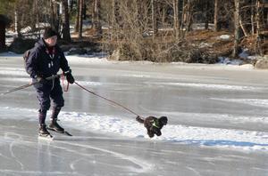 Hunden Carmen är sprittande glad när det vankas skridskoåkning i Färnebofjärden. För husse är det bara att haka på.